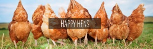 Happy, healthy chickens.