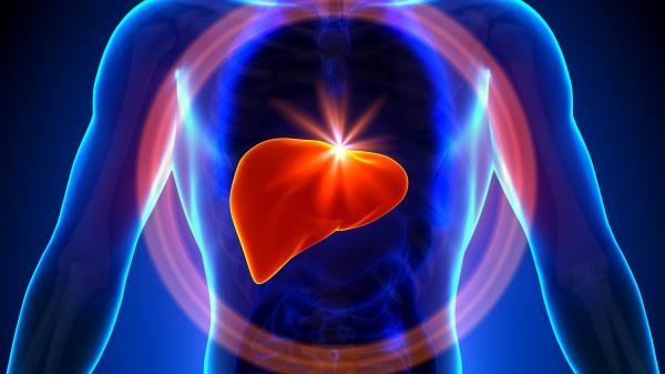The liver.