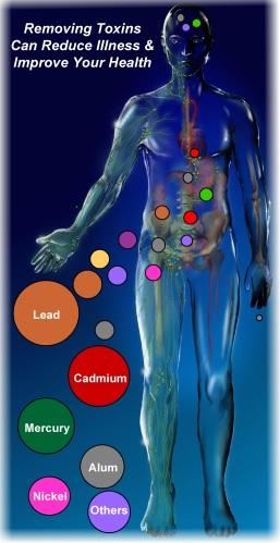 Heavy metals in the body