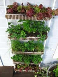 Garden in wire rack.