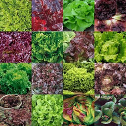 Colors of Greens
