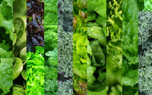 Leafy greens to eat